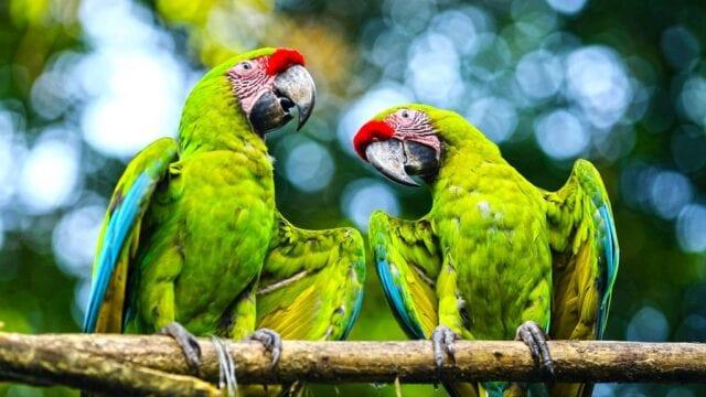 filozofia-pura-vida-kostaryka-papugi-wyrusz-w-zyciowa-podroz-soul-travel